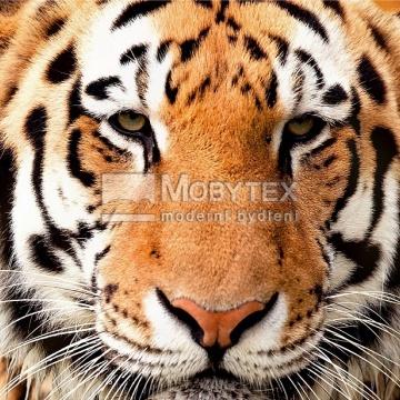 Prostírání Matějovský Tiger giant