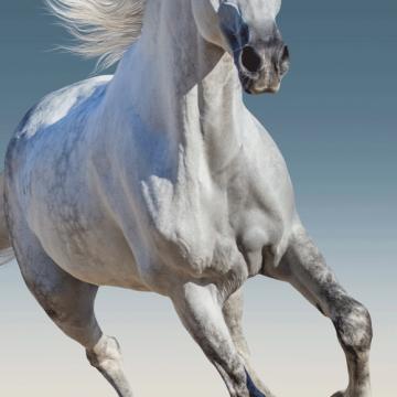 Osuška Kůň03 JF