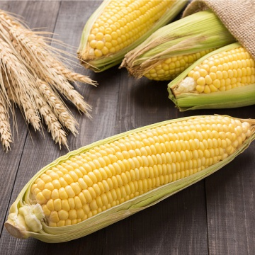 Prostírání Matějovský Kukuřice