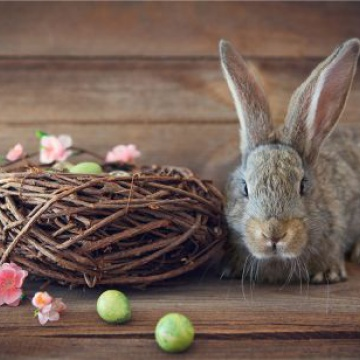 Prostírání Matějovský Velikonoce Králík